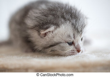 mignon, somnolent, chaton