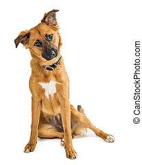 mignon, tête, brun, séance, inclinable, chien