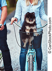 mignon, vélo, ride., panier chien, spitz