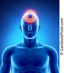 Migraine and headache concept - Male anatomy of human organs...