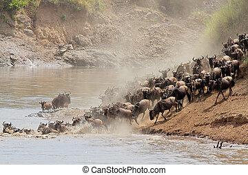 migration, gnou
