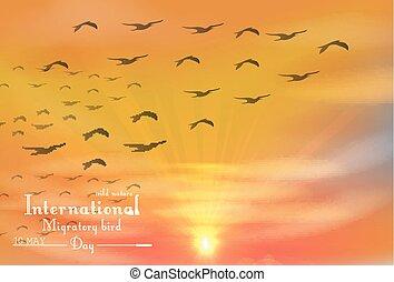Migratory birds day on sunset
