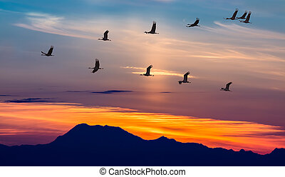 Migratory Birds Flying at Sunset - Sandhill Cranes in Flight...