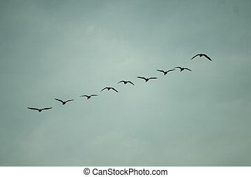 Migratory birds flying in the sky