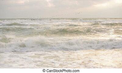 migratory birds flying over the sea - migratory birds fly...