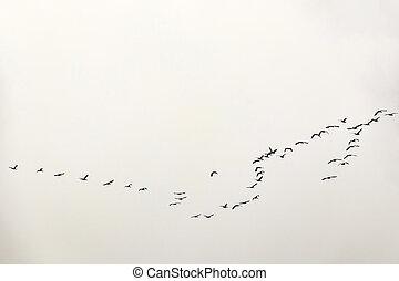 migratory birds in the sky
