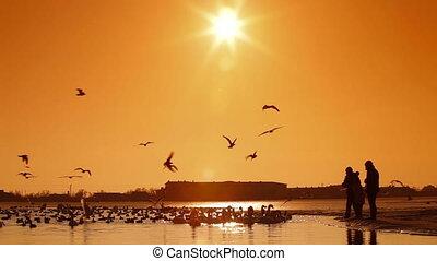 Migratory Birds in Winter