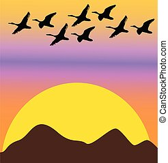 migratory birds on sunset or dawn - air, animal, avian, beak...