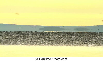 Migratory swallows - Beautiful sunrise over the lake Balaton...