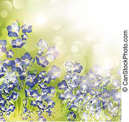 mij, vergeten, op, helder, achtergrond, niet, bloemen