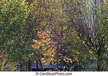 Milan (Italy) at fall