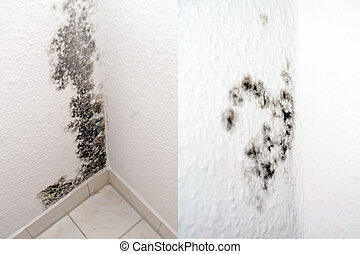 mildew in an apartment
