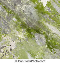 Mildewed concrete wall with green stains