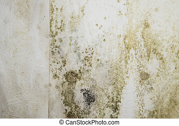 Mildewed Walls - Mildewed walls with different sorts of mold...