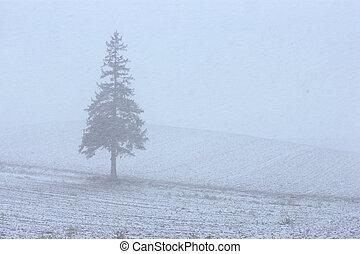 Mildseven 's tree