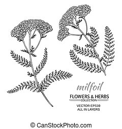 milfoil vector set - milfoil flowers vector set on white ...