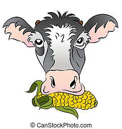 milho alimentou, vaca