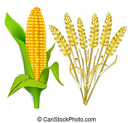 milho, e, grão