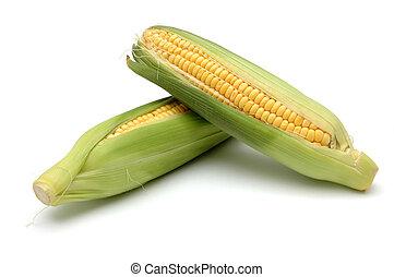 milho, em, cob, 2