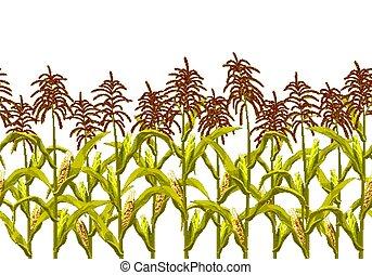 milho, illustration., borda, milho, pattern., seamless, isolado, realístico, vetorial, horizontais, botânico