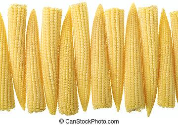 milho, isolado, fundo, bebê, branca, fila