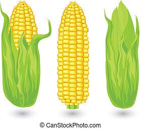 milho, maduro, orelhas