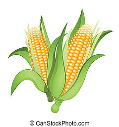 milho, orelhas