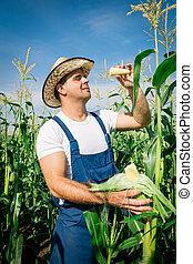 milho, planta, inspeccionando, agricultor