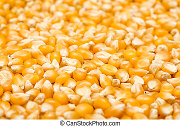 milho, sementes, closeup