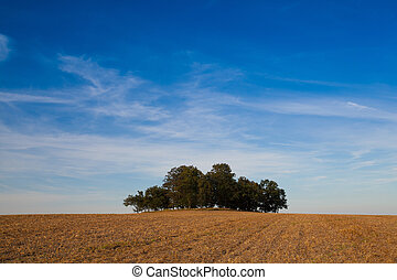 milieu, champ, entiers, arbres, île