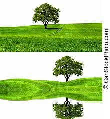 milieu, groene, natuur