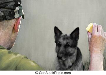 militaire, formation, chien