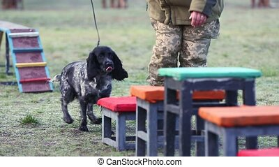 Military dog handlers train dogs. - Spaniel dog works out ...