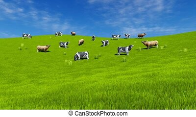Milk cows graze on green grassland 4K - Rural landscape with...