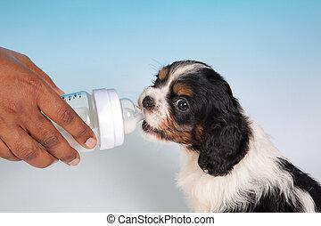 Milk puppy