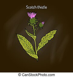 Milk Thistle medicinal plant