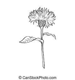 Milk thistle monochrome freehand sketch - Milk thistle black...