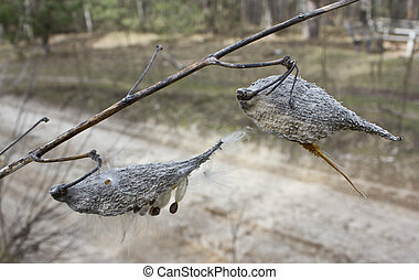 Milkweed plant is called because its seeds are covered with...