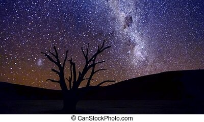 Milky Way moves across the sky, behind a camelthorn tree in...