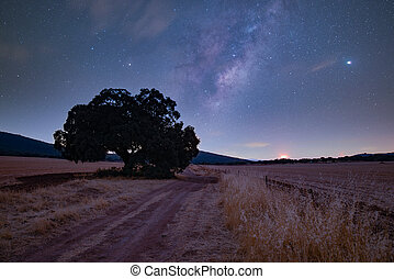 Milky Way over a dry field with a large tree
