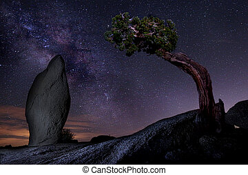 Milky Way Over a Juniper Tree in Joshua Tree National Park  USA