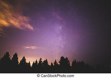 Milky Way Over Forest Trees
