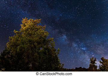 Milky Way over the Forest at the Troodos mountains in Cyprus.