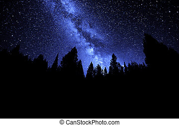 Milky Way Sky Forest at Night Time Stars