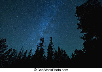 Milky Way Stars Over Tall Trees