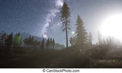 Milky Way stars with moonlight above pine trees forest