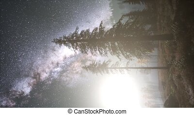 Milky Way stars with moonlight above pine trees forest....
