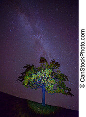 MilkyWay - The Milky Way over the alone tree silhouette....