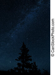 Milkyway with a pinetree in the foreground