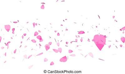 million pink sakura leaves twirly falling isolated background